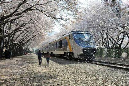 شکوفه باران در ایستگاه راه آهن +عکس