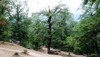 وقتی آفتها بلای جان درختان میشوند