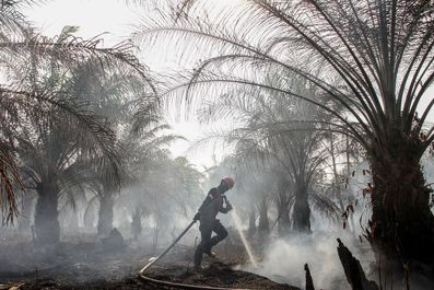 Forest fires envelop Southeast Asia in haze