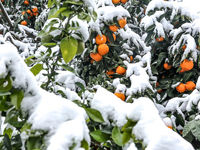 از کشاورزان کشور در برابر سرمازدگی حمایت شود