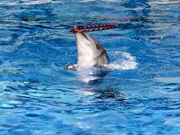 دلیل مرگ دلفینهای برج میلاد؟