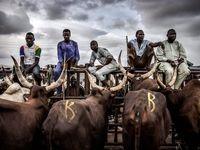 زندگی روستایی در پرجمعیتترین کشور آفریقا +تصاویر