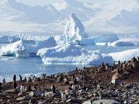 زندگی در قطب جنوب +تصاویر