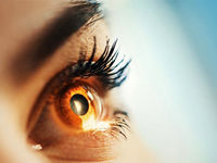پروتئینها؛ پل ارتباطی میان چشم و مغز