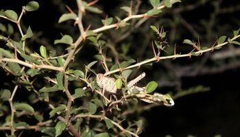 ورود ملخهای صحرایی به کشور از آبانماه