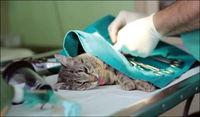 درمانگاه حیوانات خانگی +عکس