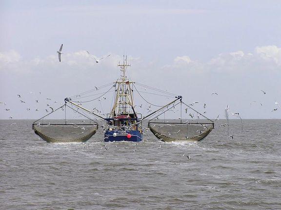 هشدار فائو نسبت به صید بیرویه ماهی