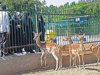زندانهایی برای حیوانات!