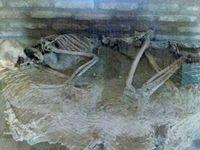 اسکلت ۵ هزار ساله را ببینید +عکس