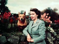 ملکه انگلیس و سگهای مورد علاقهاش +تصاویر
