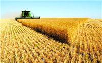 بحث خرید تضمینی، مسئله مهم کشاورزان/ بورس کالا سیاستهای تشویقی برای حضور بخش کشاورزی را فراهم کند