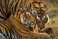 تلاش عکاسان برای کاهش حیوانآزاری در جهان +عکس