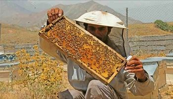 نیش و نوش بازار عسل