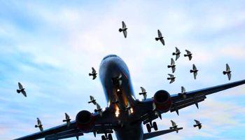 مخاطرات برخورد پرندگان با شیشه هواپیما چیست؟