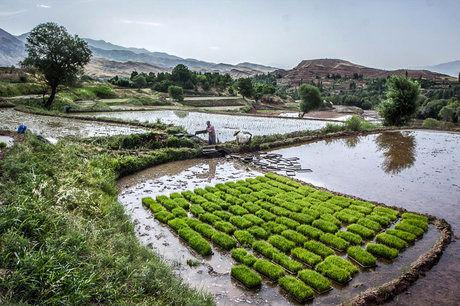 ابلاغ مصوبه جلوگیری از تغیر کاربری اراضی کشاورزی در استانهای شمالی