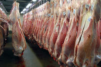 گوشت تنظیم بازاری ماه مبارک رمضان عرضه شد