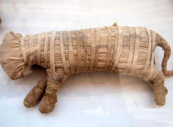 رونمایی بیش از 70 شیر و گربه مومیایی شده در مصر