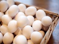 توقف واردات تخم مرغ