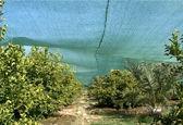 باغات نوآباد به زیر سایبان میرود/ سال گذشته در ۳۰۰هکتار از باغات سایبان زده شد