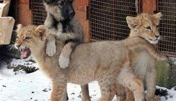 لایحه حمایت از حیوانات به مجلس میرود؟