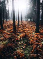 خشک شدن ۳۵۰۰ هکتار جنگل مازندران