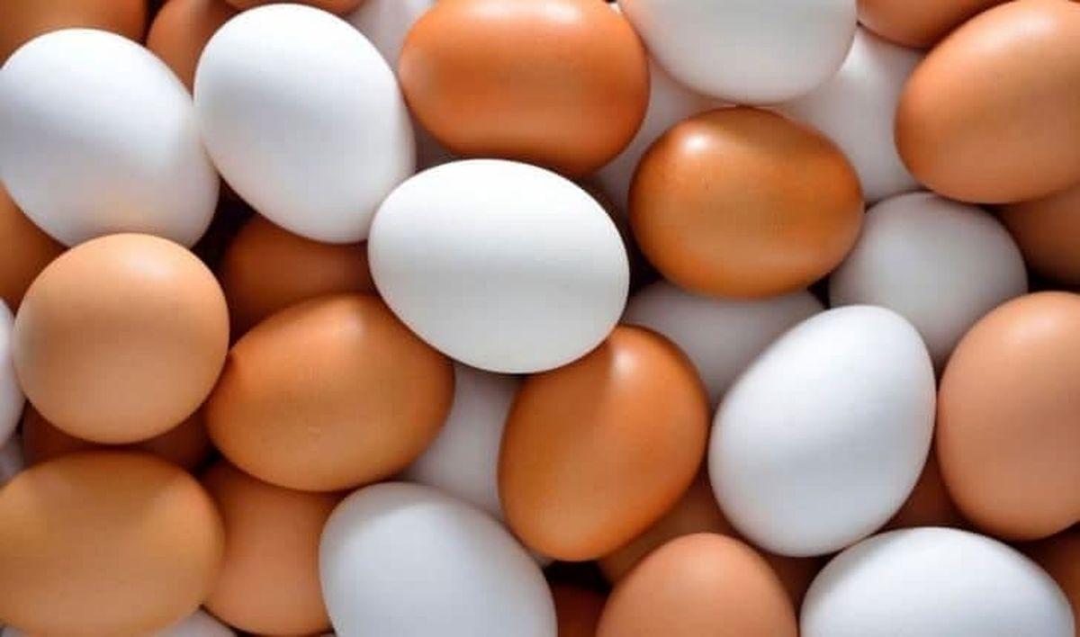ترمز قیمت تخم مرغ بهزودی کشیده میشود