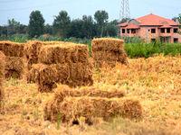 تکلیف زمینهای کشاورزی برای تغییر کاربری تعیین میشود