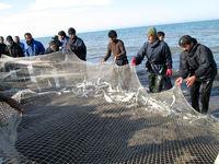 حل مشکل بیمه صیادان شمال/ صید ماهی به عمق ۴۰۰متر دریا میرسد