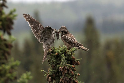 عکسهای برتر مسابقات عکاسی پرندگان