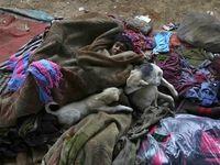 همزیستی کودک بیخانمان هندی و سگهای آواره +عکس
