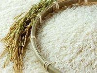 هیچ دلیلی برای افزایش قیمت برنج نیست
